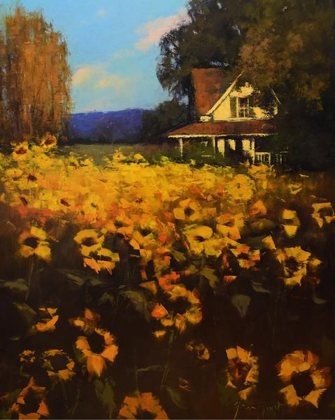 sunflower season oil 48x60